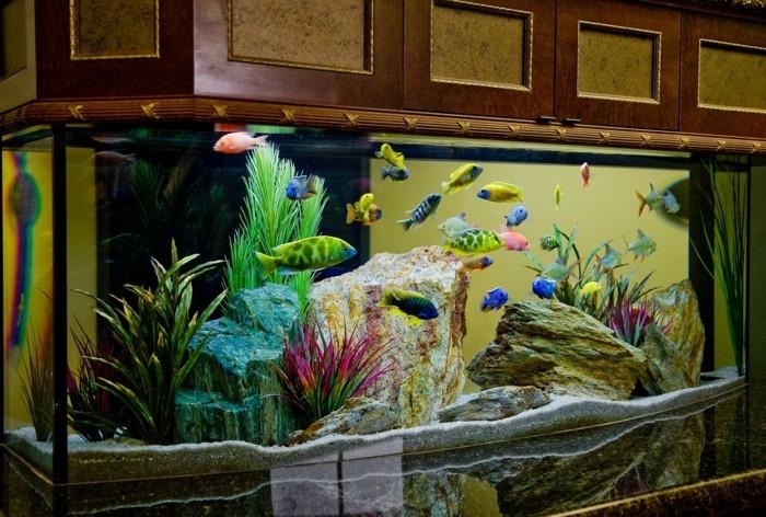 aquarium-einrichtung-groses-aquarium-steindeko-im-aquarium-fische-im-aquarium