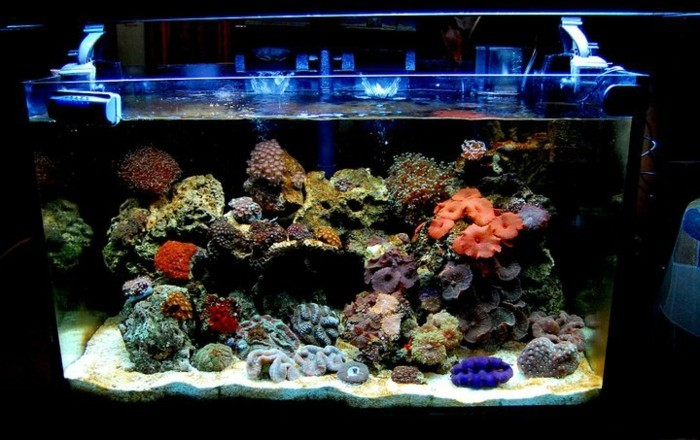 aquarium-einrichtung-korallen-aquarium-einrichtung-sand-blaues-licht-aquarium-deko