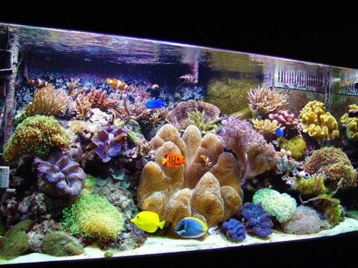 aquarium-einrichtung-mit-koralen-und-sand-meerespflanzen-aquarium-einrichten