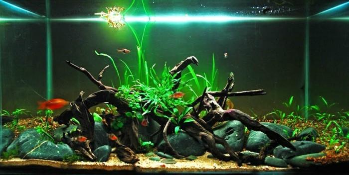 aquarium-einrichtung-mit-steinen-sand-und-asten-aquarium-licht-aquarium-gestalten