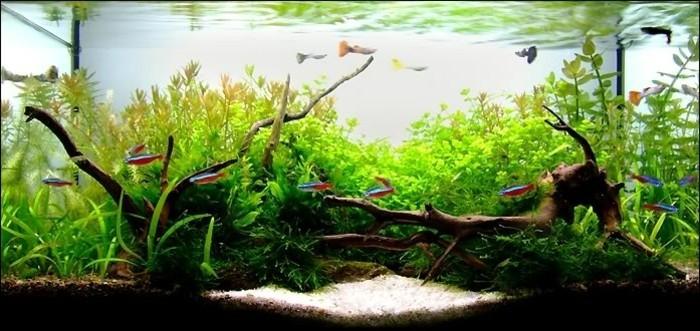 aquarium-fur-fische-schon-einrichten-aquarium-gestaltung-aquarium-deko-aquarienpflanzen