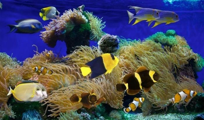 aquarium-fur-kleine-exotische-meeresfische-korallen-aquarium-gestaltung-aquarium-deko