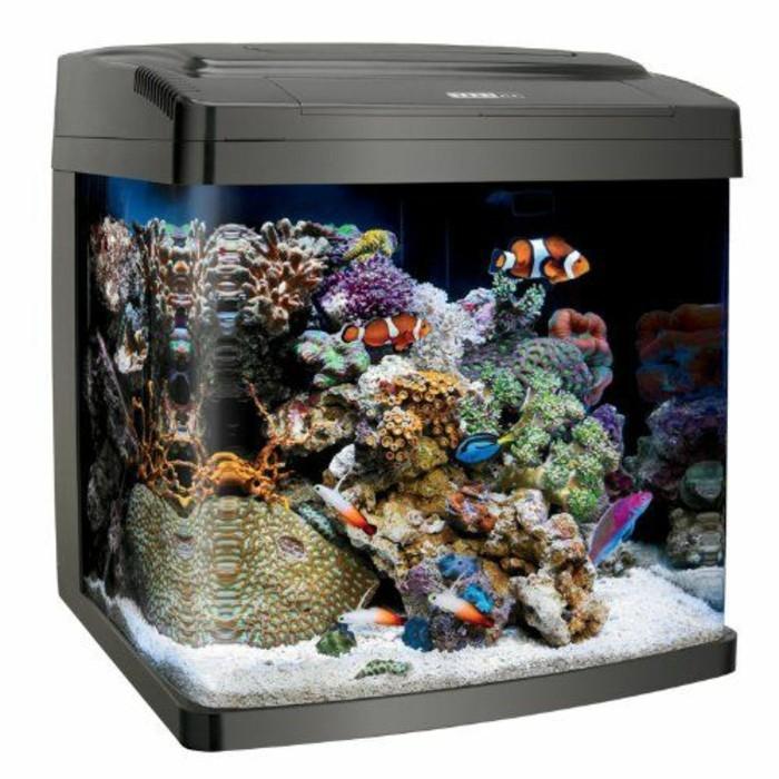 aquarium-fur-kleine-fische-korallen-weiser-sand-geschlossenes-aquarium-dunkler-hintergrund