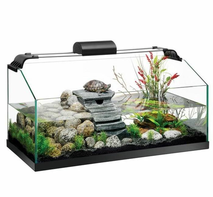 aquarium-fur-schildkroten-wasserpflanzen-steine-schildkrote-sauberes-wasser-steinedeko-aquarium-einrichtung