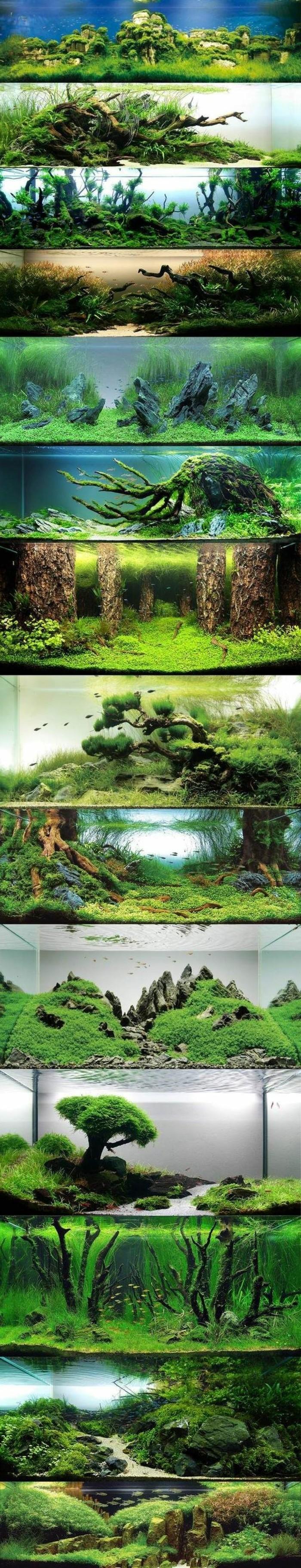 aquarium-gestaltung-beste-ideen-fotocollage-die-welt-unter-wasser-meerespflanzen