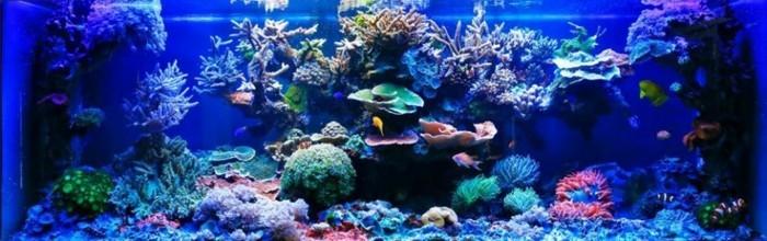 aquarium-gestaltung-groses-aquarium-deko-aquarium-gestaltung-aquarium-einrichten