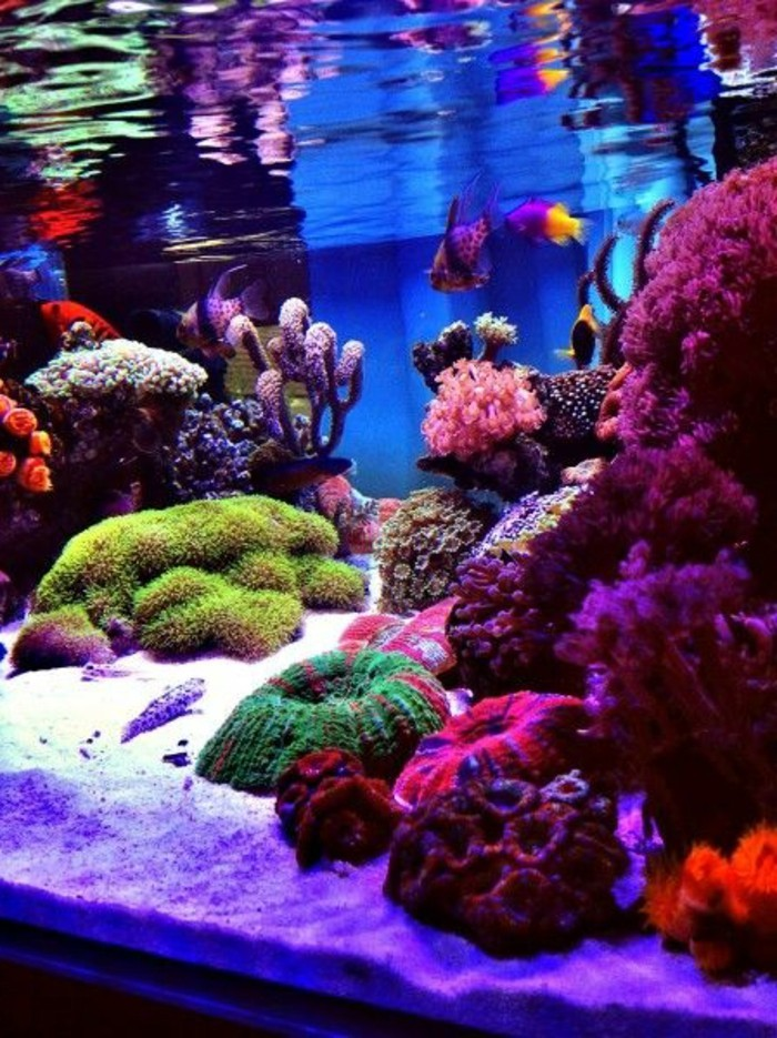 aquarium-mit-meereswasser-aquarium-mit-meeresfischen-aqarium-mit-korralen