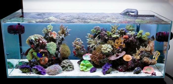 aquarium-mit-salzwasser-meereswasser-koralle-exotische-fischen-weiser-sand-aquarium-einrichten