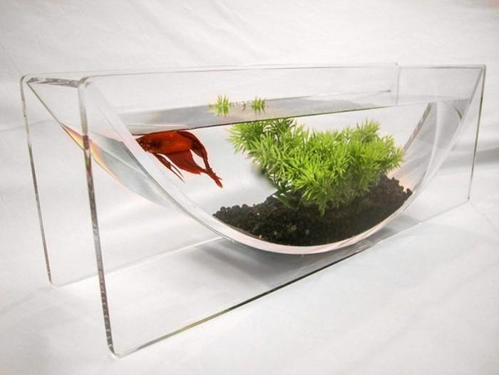 aquarium-mit-unregelmasiger-form-fur-grose-fische-schwarze-steine-wasserpflanzen