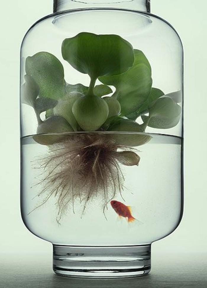 aquarium-mit-unregelmasiger-form-pflanzen-fur-aquarium-goldfisch-glas-aquarium-gestaltung