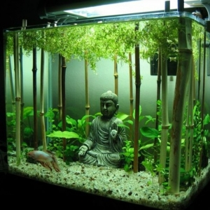 Aquarium Einrichtung sorgt für das Wohlfühlen der Wassertiere