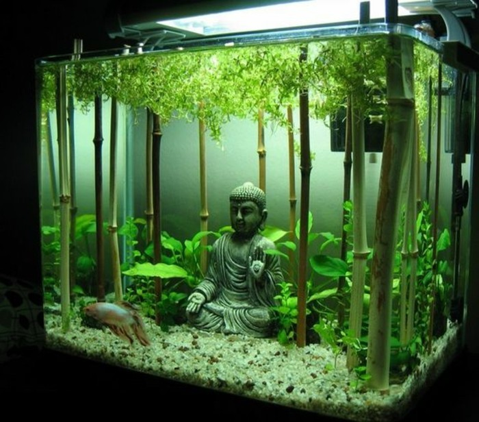 Freshwater Fish Tank Decoration Ideas