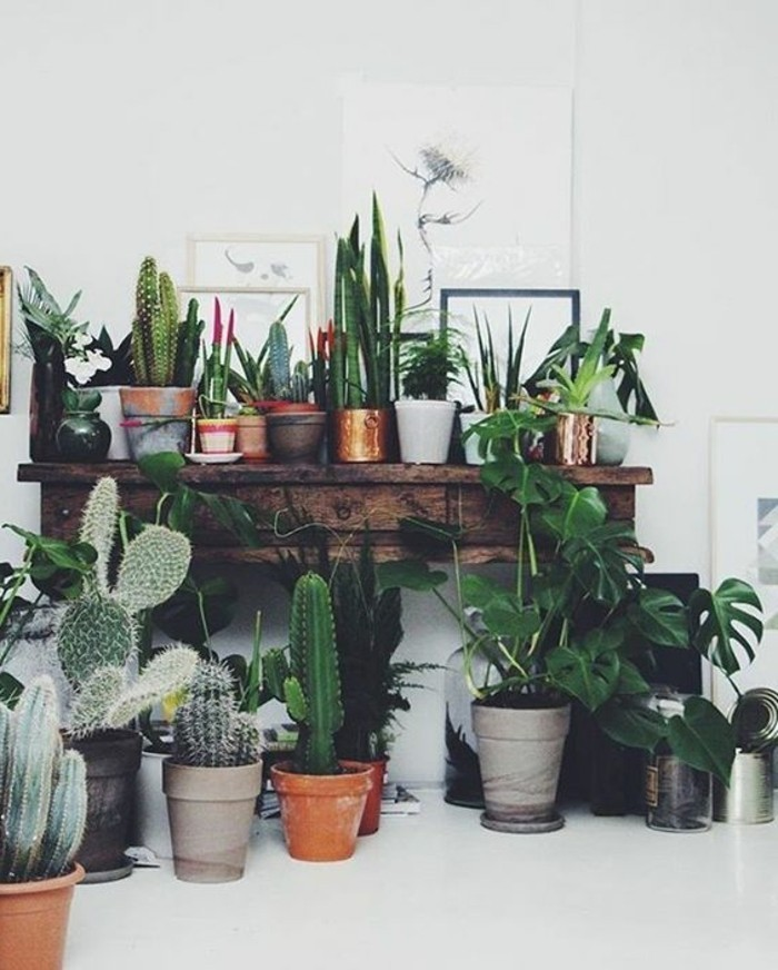 dekoideen-kakteen-kakteenecke-pflanzeneckewohnzimmer-dekotipps-dekotipps-wohnzimmer