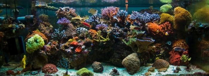 die-beste-aquarium-gestaltung-fur-meeresfische-mit-korallen-steinen-und-sand