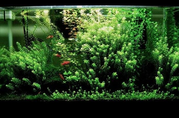 die-schonste-aquarium-deko-aquarium-einrichtung-aquarium-mit-pflanzen-einrichten