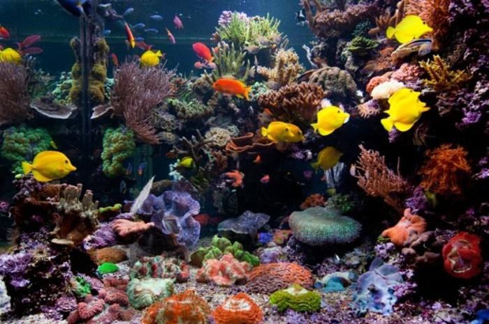 groses-aquarium-korallen-aquarium-deko-aquarium-gestalten-aquarium-einrichten