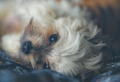 Haustiere wählen – welche passen zu Ihrem Lebensstil