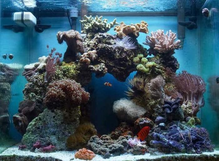 viereckiges-aquarium-fur-fische-steine-meerespflanzen-koralle-blaues-wasser-aquarium-einrichten