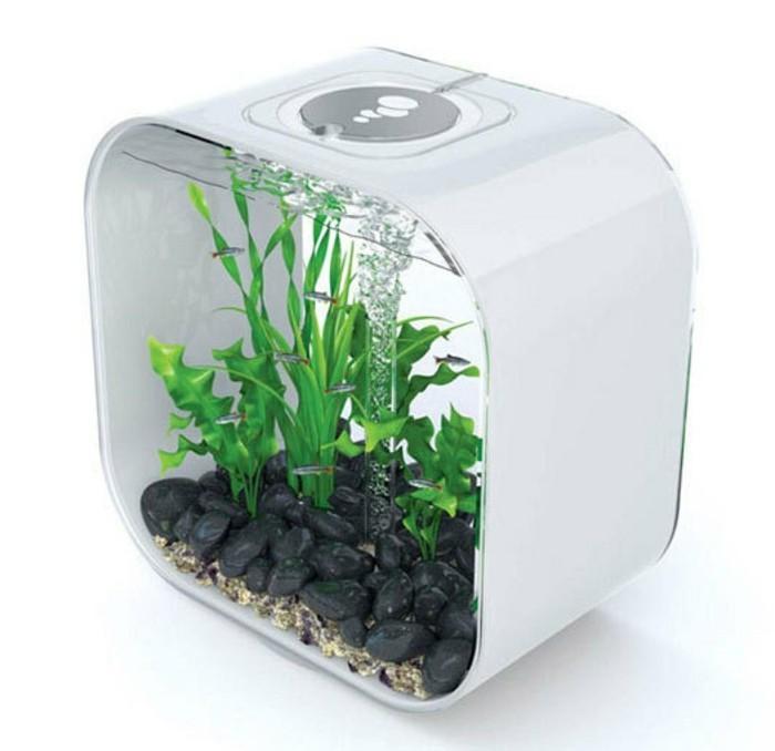viereckiges-kleines-aquarium-mit-steinen-sand-wasserpflanzen-kleine-fische-aquarium-deko