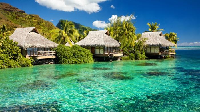 bora-bora-insel-aussicht-wasser-häuser-wasserhaus-hotel-jedes-haus-ist-ein-zimmer-für-die-gäste-palmen-transparentes-wasser