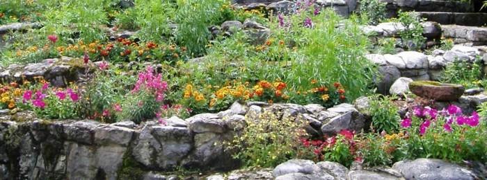 blumenbeet-mit-steinen-grüne-pflanzen-frühlingspflanzen