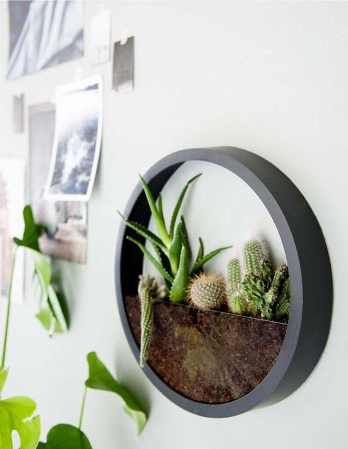 deko-tipps-terrarium-weiße-wand-fotos-fotowand-grüne-pflanzen-aloe-vera