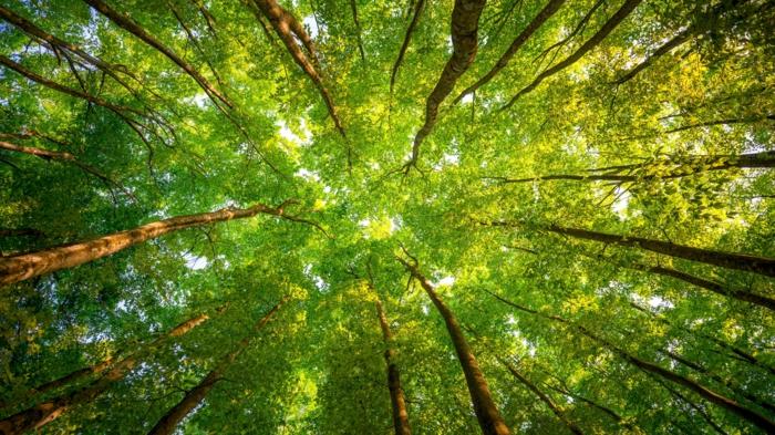 die-wälder-die-grüne-lunge-der-erde