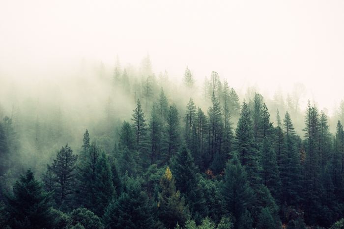 die-wilden-wälder