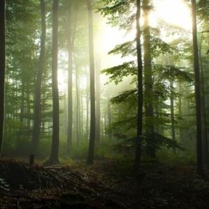 Resysta - die umweltfreundliche Holzalternative
