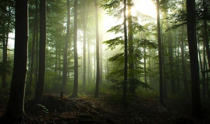 wilde-wälder