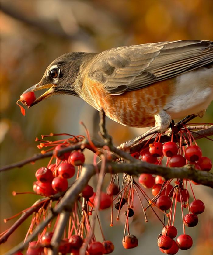 ein kleines Vogel mit orangen Fädern am Bauch