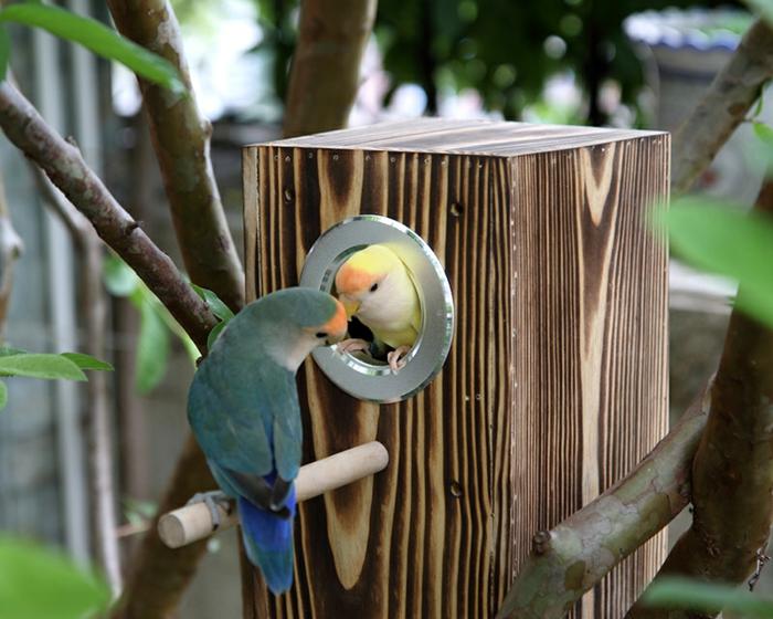 Holzhäuschen für Vögel: Nistkasten für Papagaien