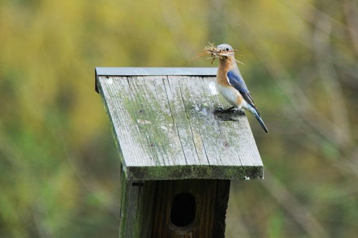 ein kleines Vogel bringt mehr Futter zu seinem Vogelhaus