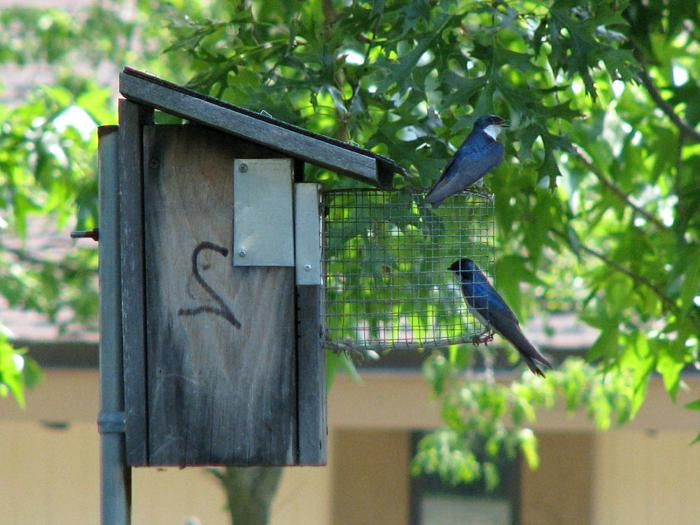 Vogelhaus aus Holz mit einer Zelle am Eingang
