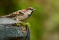Nistkästen selber bauen – tolle Beschäftigung für Vogelliebhaber