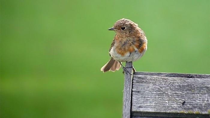 Vogelhaus bauen: Vogelhäuschen für Rotkehlchen