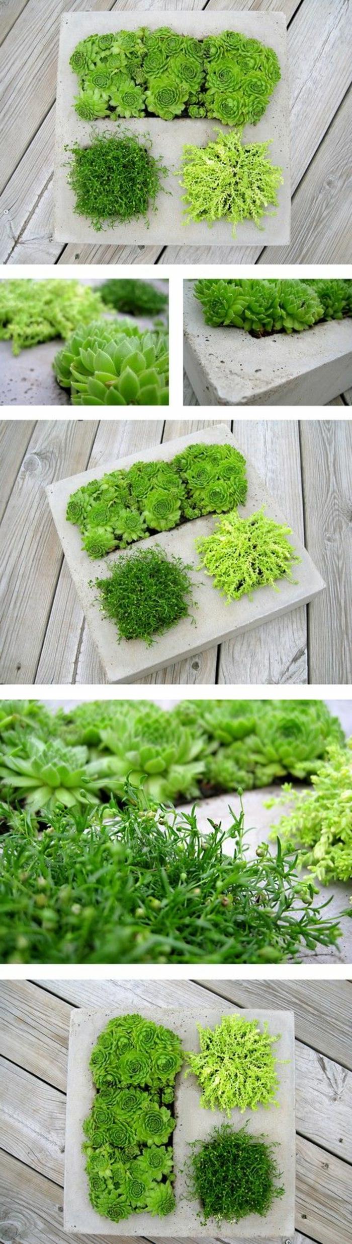 außergewöhnliche-deko-eine-grüne-komposition-aus-verschiedenen-pflanzen