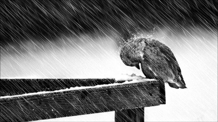 schwarzweiße-traurige-bilder-zum-weinen-ein-einsamer-trauriger-vogel
