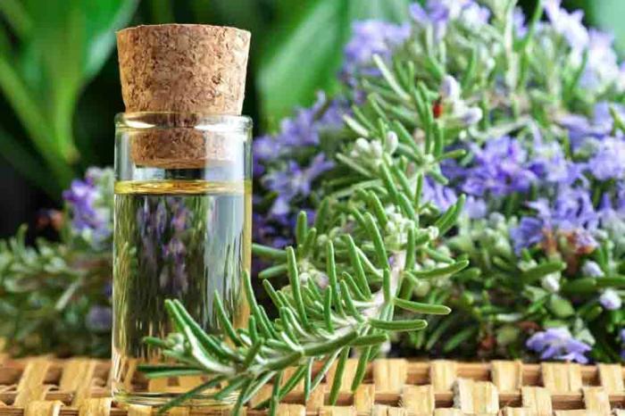 pures ätherisches Rosmarinöl für festes Shampoo