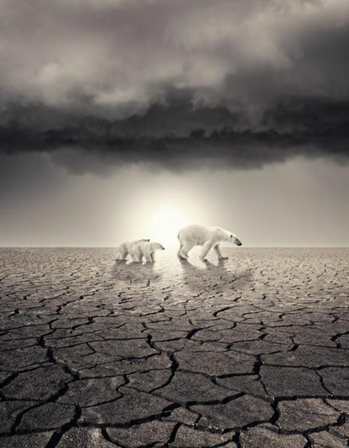 trauriges-bild-die-folgen-der-globalen-erwärmung-zwei-eisbären-in-wüste