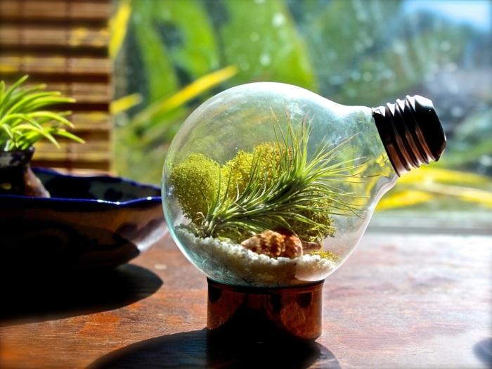 große glühbirne, terrarium, florrarium, diy, pflanzen