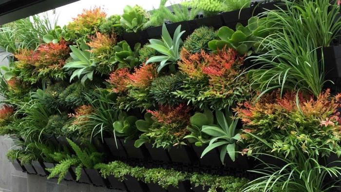 Vertikaler Garten mit exotischen Pflanzenarten in einigen verschiedenen Farben