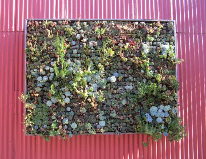 Vertikaler Garten mit unterschiedliche Arten von Hauswurzen in einer Komposition