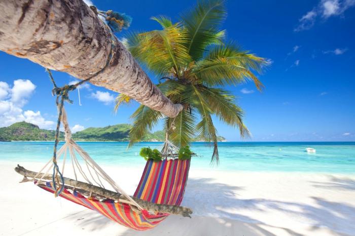 palmen und hängematte sind die perfekte kombination wasser ozean urlaub