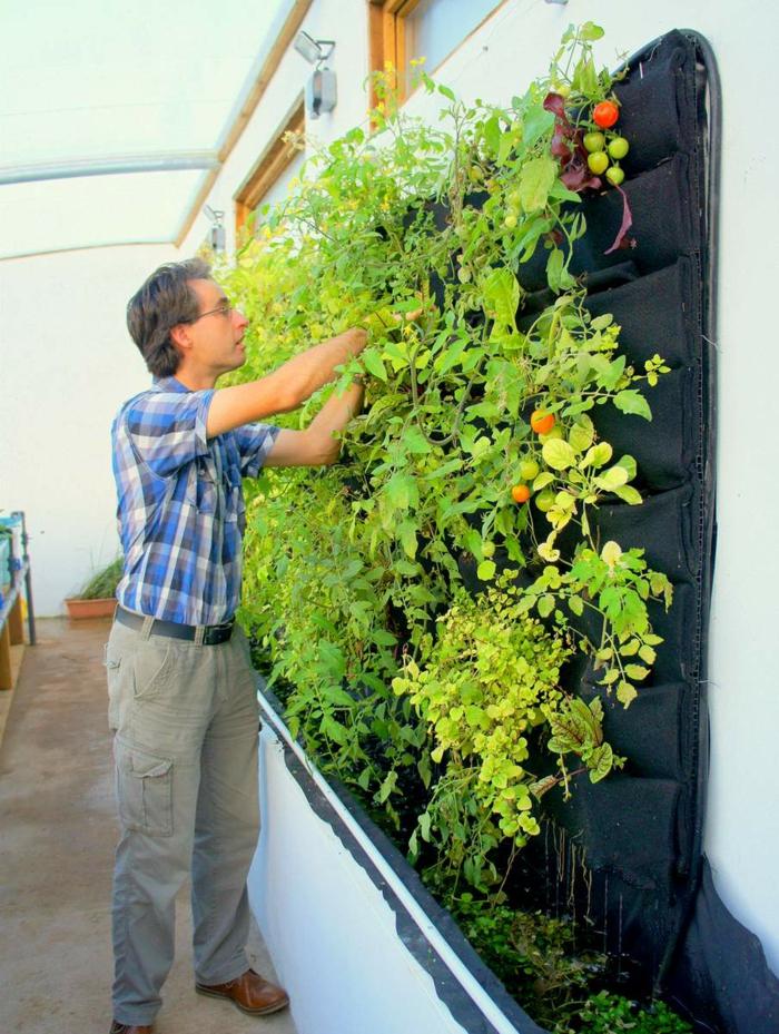wie nützlich vertikal Pflanzen - Tomaten und Paprikas
