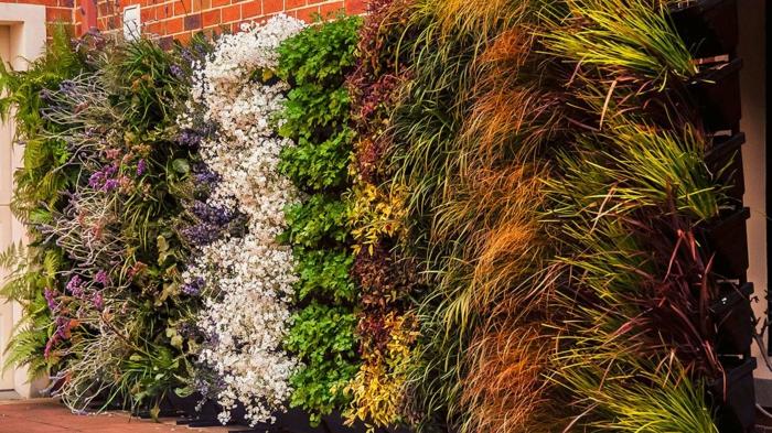 witzige Blüten und Pflanzen mit kleinen Blättern, Blüten in vier Farben