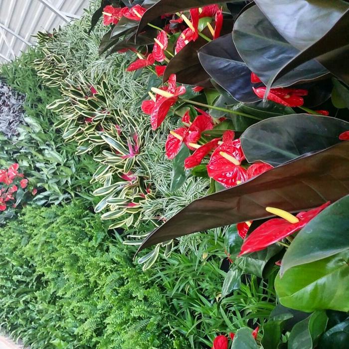 rote Blumen mit großen Blätter und Zierbüsche - Pflanzwand selber bauen