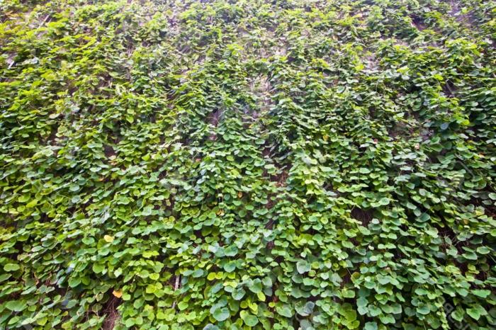 vertikal Garten - eine Mauer voller grüne Blätter die hängen an Drahten in geometrischer Formen