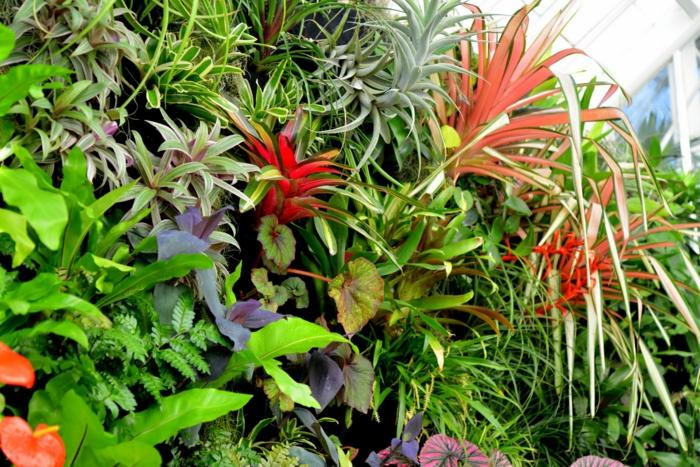 vertikal Garten mit rote und blaue exotische Pflanzen mit Vielfalt an Blätter