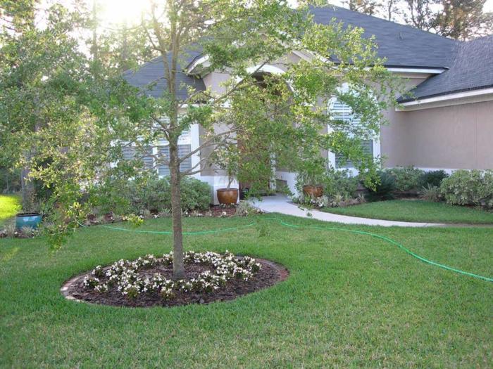um dem Baum Pflanzen zu züchten - Vorgarten Ideen